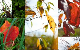 Autumn Is with Us